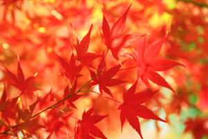 free-photo-autumn-leaves-beiz-l063421